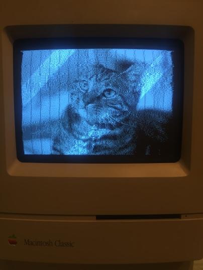 macintosh_cat